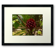 Glorious Red Wax Ginger - a Gift from Hawaii Framed Print