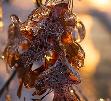 Ice Storm 2013 - Oak Leaves Jewelry by Georgia Mizuleva