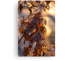 Ice Storm 2013 - Oak Leaves Jewelry Canvas Print