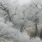 Frosty December Morning 12 by Marijane  Moyer