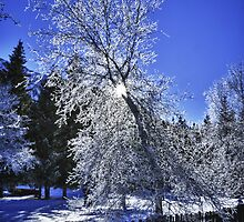 Tree covered in frost winter scene wall art fine art color - Pizzo di Ghiaccio by visionitaliane