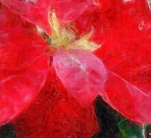 Mottled Red Poinsettia 2 Sketchy by Christopher Johnson