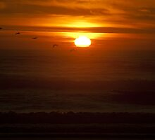 Color wall art sunset on the Pacific Ocean with pellicans - La dove sparisce il Sole by visionitaliane