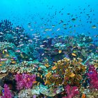 Fantasea Reef by Mark Rosenstein