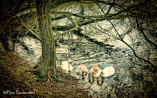 Family Life by © Kira Bodensted