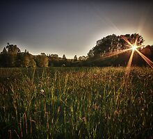 Autumn sunset landscape fields and forest in the Pacific Northwest fine art fall color wall art - Tramonta il Sol by visionitaliane