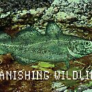 Sea life, Codfish by Dick  Iacovello