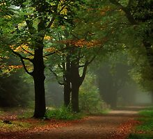 Autumnal uncertainty by jchanders