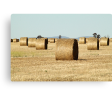 Haybale Cylinders Canvas Print