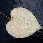 A Leaf in the Rain by Betty Mackey