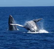 Whale Under the Boat 16 by Gotcha29
