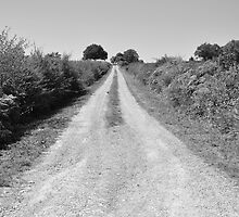 The Road Less Travelled by David Perrin