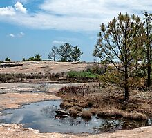 Arabia Mountain by Evelyn Laeschke
