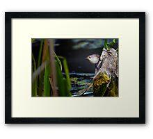 thornbird at Finnigans Lake Framed Print