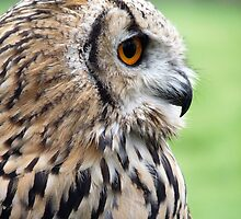 Bengal Eagle Owl by BlueEyePictures