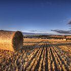 After the Harvest by Nigel Bangert