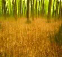 Whacky Woodland by Heidi Stewart