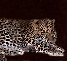 Leopard Cub by phil decocco