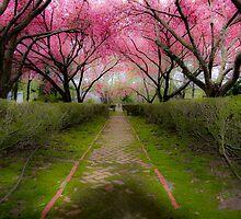 Garden path by wlkomni