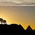 Coastal Silhouettes by John Butler