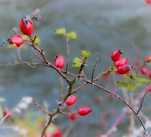 Winter Berries by liberthine01