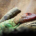 Chameleon by Amyypops