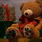 Teddy Bears at Christmas  - Photographs and Enhanced Photographs