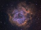 The Rosette Nebula by astrochuck