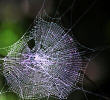 Beautiful Web by myraj