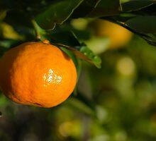 Tangerine Tree by Douglas Hamilton