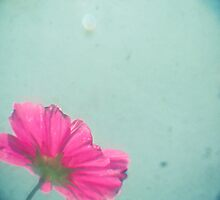 A Splash of Pink by Cassia