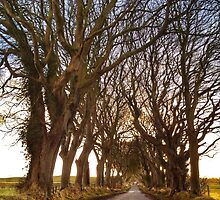 The Dark Hedges by Ludwig Wagner