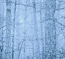 Faded Woods by NatureGreeting Cards ©ccwri