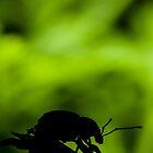 Weevil Silhouette by Dave van der Wal