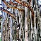 Banyan 21 by Dawn Eshelman