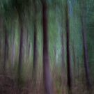 Black Birch Forest by Robyn Carter