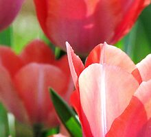 In The Tulip Garden by AngieDavies