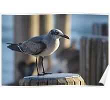 Docked Seagull Poster