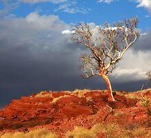 Phoenix Tree by evolutionx
