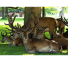 Deer family Photographic Print