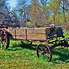 Iron-Wheeled Hay Harvester by Brenton Cooper