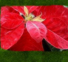 Mottled Red Poinsettia 2 Blank P1F0 by Christopher Johnson