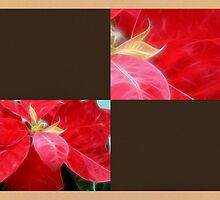 Mottled Red Poinsettia 2 Blank Q3F0 by Christopher Johnson