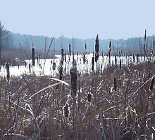 Cattails by the River by Nancy  Smith