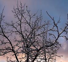 Toronto Ice Storm 2013 -  Icy Branches Sunset by Georgia Mizuleva