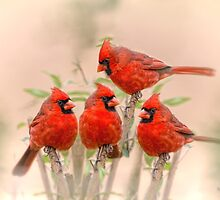 Cardinal Quartet by Bonnie T.  Barry