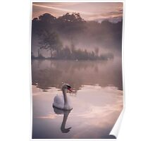 Swan reflected in a lake on a misty morning Poster