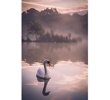 Swan reflected in a lake on a misty morning Photographic Print