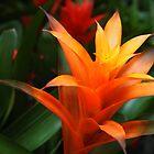 Orange Bromeliad by Linda  Makiej