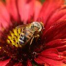 HONEY BEE by fsmitchellphoto